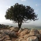 Hoe, waarom en wanneer vieren Joden Toe Bisjwat?