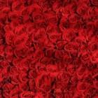 Betekenis Kleur Bloemen - Liefde & Vriendschap