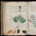 Het Vonynichmanuscript: Een mysterieus onleesbaar document