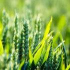 De geschiedenis en ontwikkeling van landbouw in Nederland