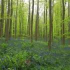 Bosbouw in de middeleeuwen en vroegmoderne tijd