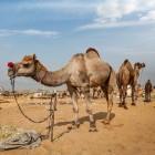 Van archeoloog tot militair: wie was Lawrence van Arabië?